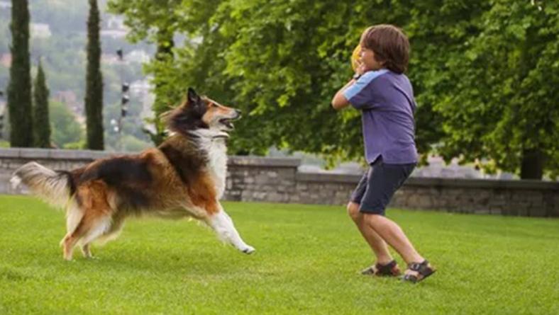Evita multas, corrosión y malos olores a causa de la orina de mascotas con VINACLEAN